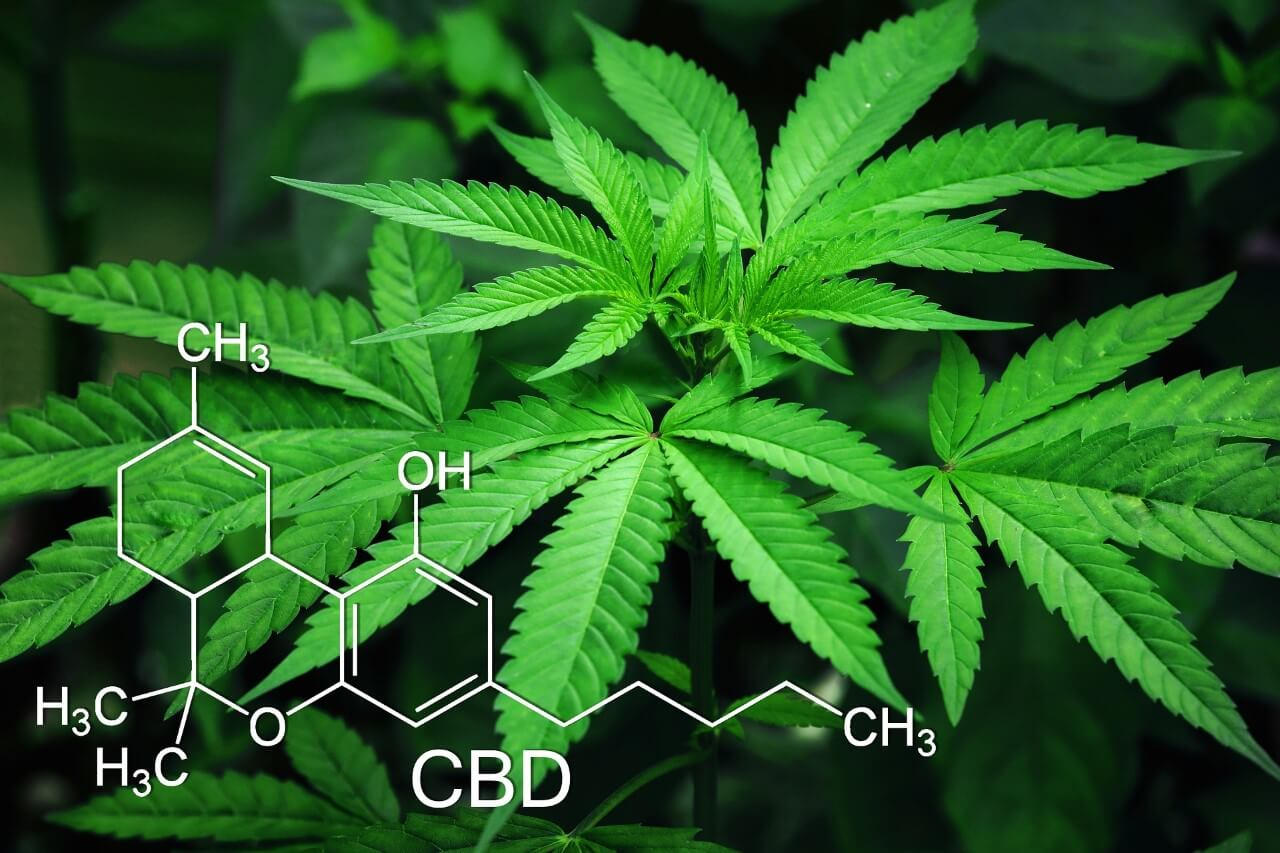 What is Delta-8 Hemp THC (And How Is It Different)?